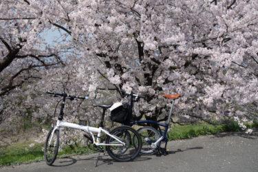 木曽長良背割堤の桜並木でお花見 20180410